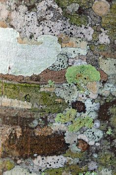Tree Bark and Lichen