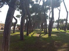 #pineta di #pineto #abruzzo #italy