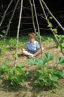 Bean & Tomato plant teepee.  This is how my kids will get excited to garden!