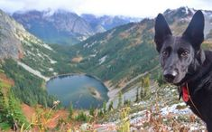 10 Dazzling State Parks That Are Perfect For Your Next Adventure With Your Dog