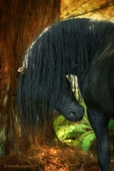Black and beautiful. Horse with his head bowed down and beautiful mane flowing down. Gorgeous horse!