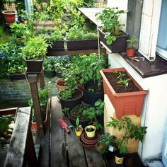 Take your patio layout design to the next level with our list of favorite ideas. Fruit Plants, Fruit Garden, Edible Garden, All Plants, Types Of Plants, Indoor Plants, Types Of Vegetables, Planting Vegetables, Growing Vegetables