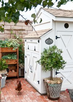 planter boxes & chicken coop