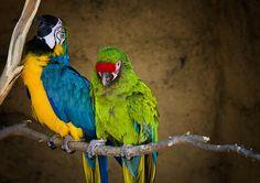 """Out on a Limb""   #parrots #birds #avian #wildlife #nature"