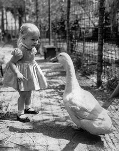 1950s-Lori Anne Longworth, 18 months, meets Mike the Goose at Griffith Park Children's Zoo. (Photo by Frank. Q. Brown / Los Angeles Times)