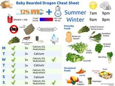 Feeding Your Bearded Dragon In The Right Way Bearded Dragon Feeding, Bearded Dragon Care Sheet, Bearded Dragon Food, Bearded Dragon Terrarium, Curly Endive, Bag Crochet, Food Charts, Reptile Enclosure, Reptile Cage