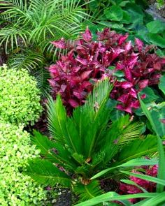 Tropical Garden Ideas Nz residential garden design auckland | garden ideas | home and