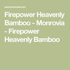 Firepower Heavenly Bamboo - Monrovia - Firepower Heavenly Bamboo
