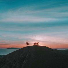 Two Trees, Ventura CA