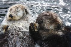 From watching otters to sipping spiked hot chocolate, you and your special someone have a lot to keep you busy this winter.