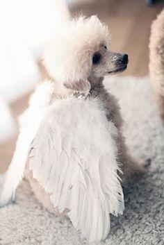 Sweet little angel doggie