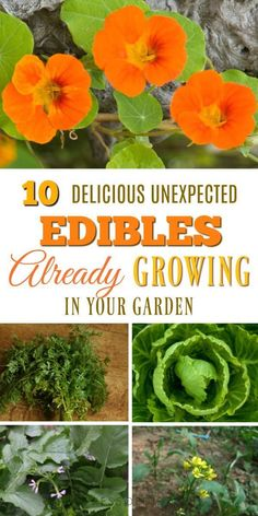 Did you know there are lots of edible foods growing in our gardens that we never eat? See what you can forage in your own backyard. #gardening #foraging #gardentips #veggiegarden #vegetables #edibles #empressofdirt #gardens #foodgrowing