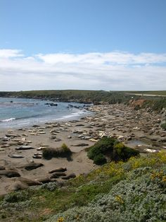 See hundreds of fascinating elephant seals on our seasonal tour at the Piedras Blancas Elephant Seal Rookery