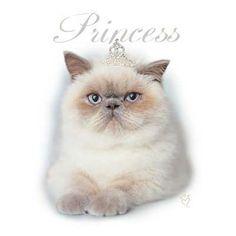 Princess Cat Shirt 10731HL4