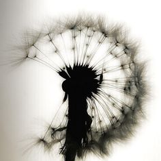 "this dandelion as a tattoo with ""a thimble full of dandelion wine"" somewhere. maybe as the stem?"