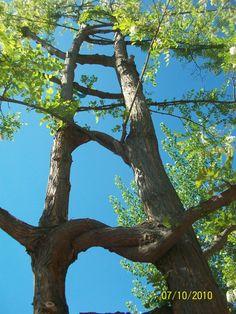 Casas vivas de arboles's Photos · Casas vivas de arboles's Page/tree splicing