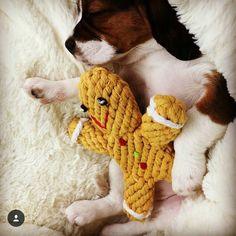 Sunday = snuggle day  Via: @puppy_peppa  #pawsoffun #gingerbread #snuggles #newtowndogs #newtown #camperdown #camperdowndogs #sydneydogs #sydney #innerwestdogs by pawsoffun