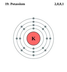 atom diagrams: potassium atom potassium atom, science activities, shells,  shelled, seashells
