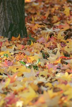 fall outdoor cleaning checklist - houseplansandmore.com