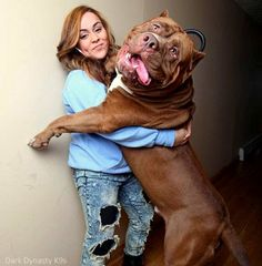 175-Pound Pit Bull May Be World�s Biggest