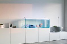• #goldfishunion #aquarium #aquascape #fancygoldfish #tosakin #interior #design #minimalism #minimalist #interiordesign