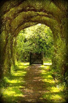 Gorgeous tree tunnel and intriguing gate - Nature's Archway The Secret Garden, Secret Gardens, Hidden Garden, Tree Tunnel, Landscape Designs, Landscape Architecture, Plantation, Modern Landscaping, Landscaping Ideas