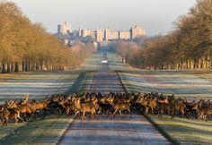 Windsor State Park, England