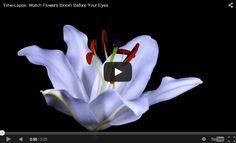 Cele mai frumoase videoclipuri time-lapse https://veresmarta.wordpress.com/2015/01/16/time-lapse-watch-flowers-bloom-before-your-eyes/