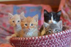 {basket full of kittens} best present, ever. I want one. :)