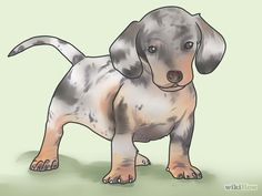 Image titled Potty Train a Dachshund Step 6