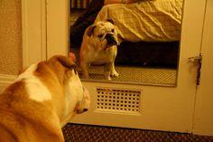 ¿Pueden los perros reconocerse en el espejo?