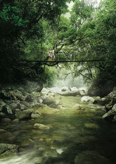MOSSMAN GORGE | DAINTREE NATIONAL PARK | QUEENSLAND | AUSTRALIA