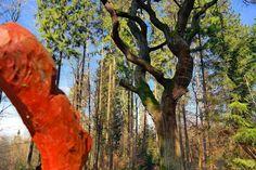 Melsungen und Umgebung © Hans Jürgen Groß - 105913934263687420804 - Picasa-Webalben