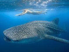 zwemmen met walvishaaien - Mexico ✔2013