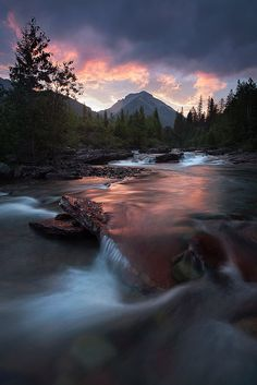 Montana Wild -- Glacier National Park, MT by Scott Hotaling**