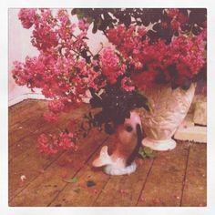 Crape myrtle and George my fish vase