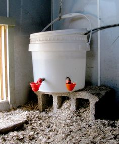 Natural Chicken Care and Chicken Keeping, Care for chickens in a natural, organic and holistic way. Methods based on chicken behavior and biology.