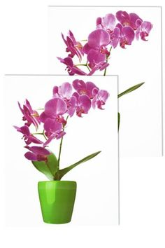 orchidee xl 10000