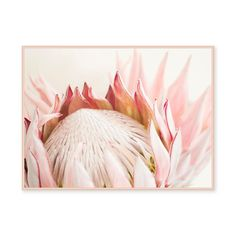 Australian native flowers have had a big comeback in terms of floral fashion, but now the trend is moving from vases to walls. Protea Art, Protea Flower, Flower Art Images, King Protea, Australian Native Flowers, Decoupage, Floral Photography, Botanical Prints, Nursery Art