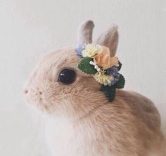 Oh bunny baby ...
