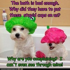 A Real Reason for Your Dog to Hate its Bath