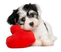 www.pamperedpetstravel.com  #travel #trip #traveling #PetTravel #dog #dogs #puppy #puppies #pet #pets #cute #CuteDog #Heart