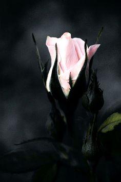 ᏉᎥᏟᏆᎾᏒᎥᎪᏁ  #pink#black#victorian