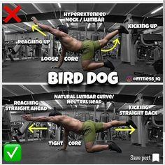 corretnes exercises bird dog - weighteasyloss.com