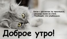 orig_500077352602c5123d0b9a00a2ab6b52.jpg (599×350)