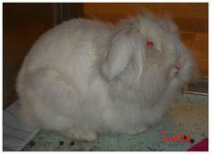 adoptable rabbits