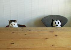 まこかわいい~。 #cat