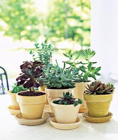 Matching pots make a statement