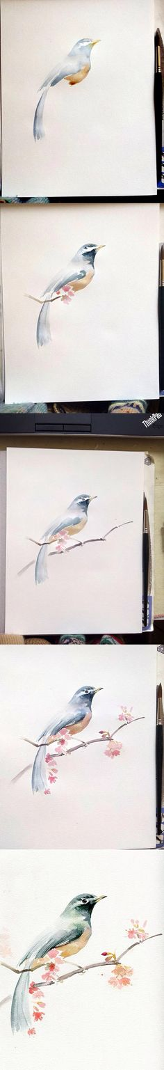 Bird: painting step by step