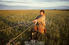 Image of sasha seratetto, a nenets reindeer herder, pulls on a rope as he checks a fish net he has set on a tundra pond. yamal, western sibe...